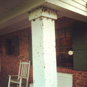 bugs_porch
