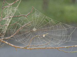 spider web_motherhood
