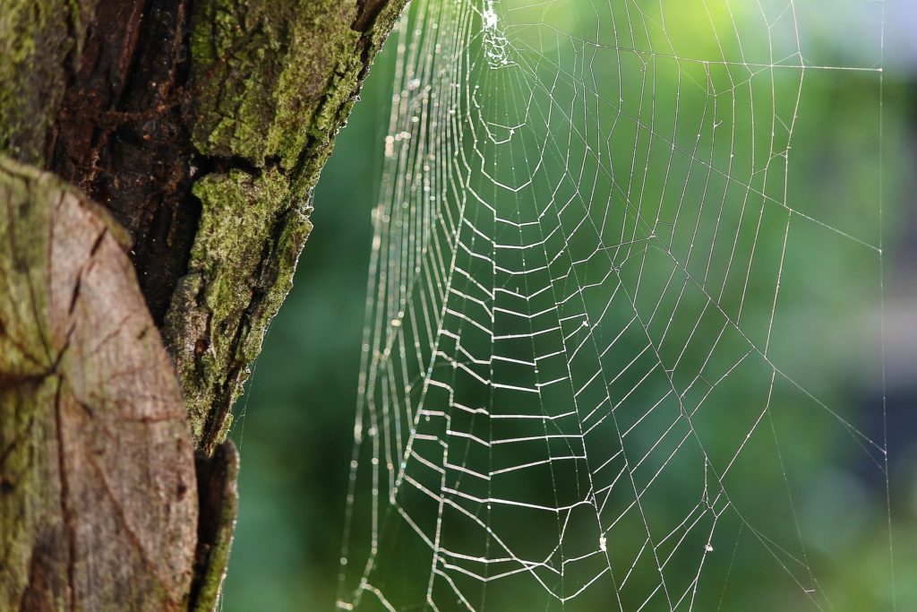 spider web_tree_motherhood
