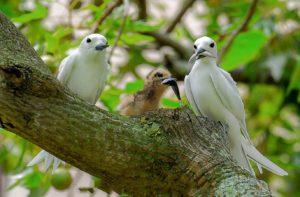 empty nest brids feeding chick