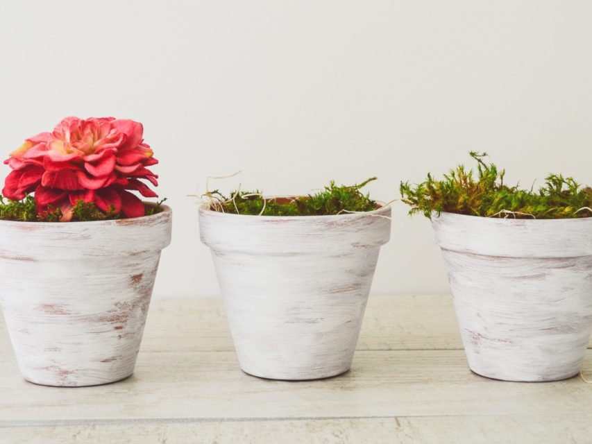 potted plants_white
